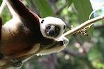 lemurien madagascar 3