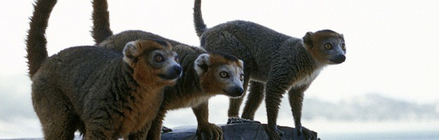 Lemur Communication