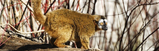 Hábitat y Distribución del Lémur
